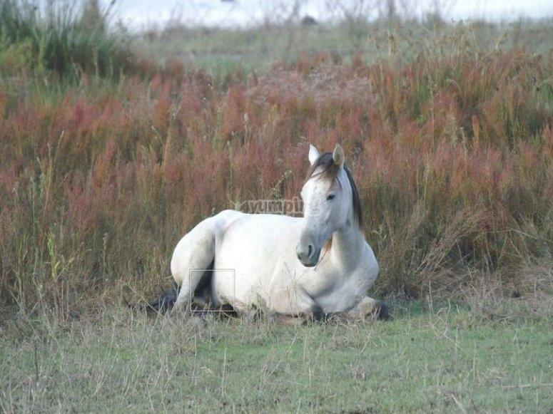 un caballo blanco sentado