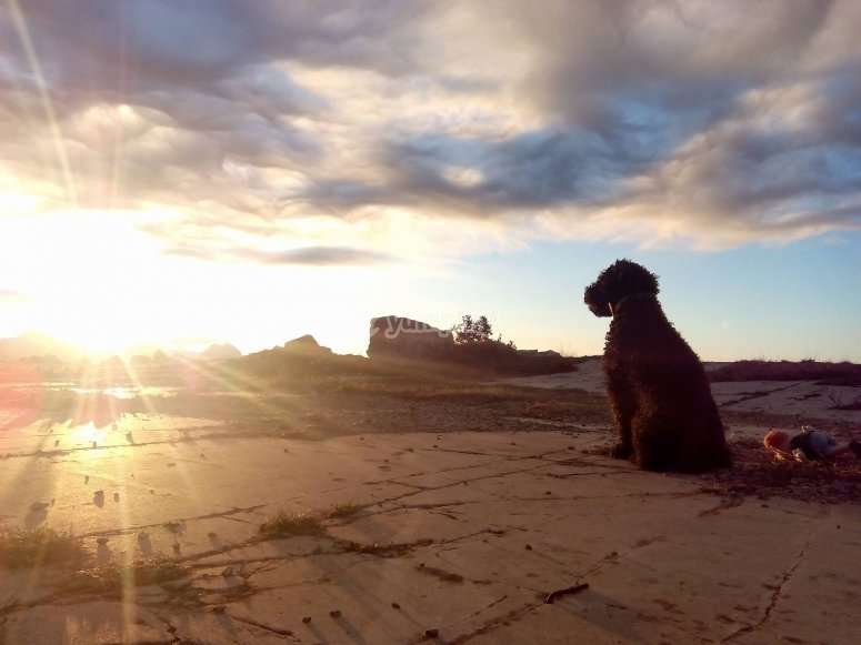 与我的狗一起日落