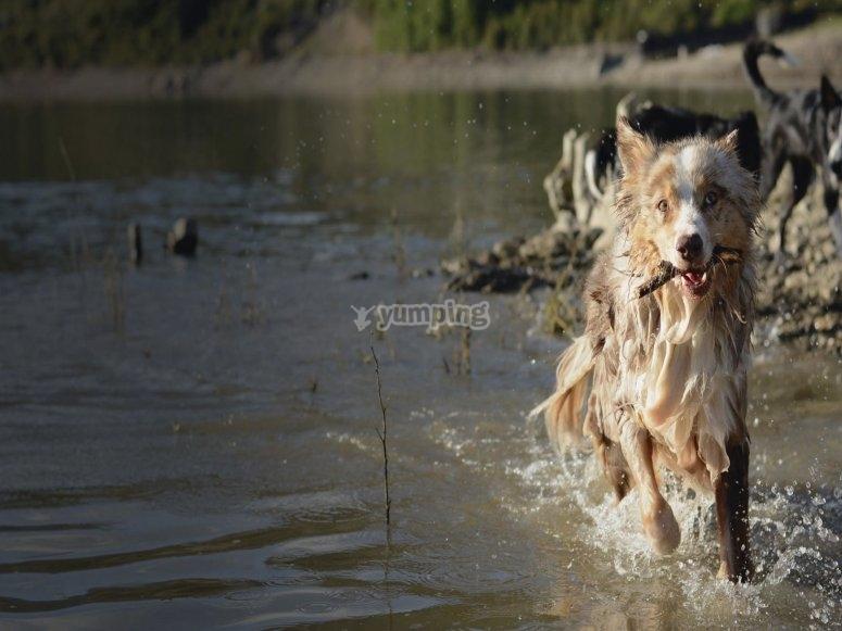 沿河跑的狗