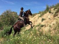doñana  montado a caballo
