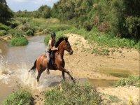 Disfruta a caballo en Donana