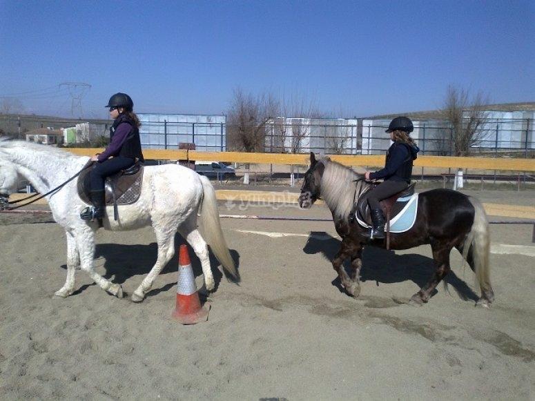 Des chevaux à l'école d'équitation
