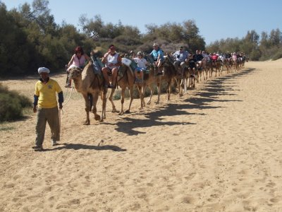 Paseo en camello en las dunas de Maspalomas 30 min