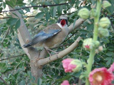 OutbackSpain Ornitología