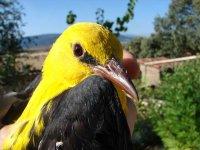 鸟类的颜色可以壮观