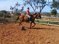 Clase de equitación a todos los niveles