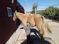 Pequeña preparando al caballo antes de la clase