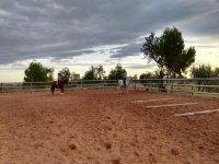 Superando obstáculos con los caballos