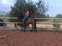 Clase de equitación en la pista