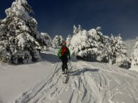与滑雪板运动滑雪血统杉