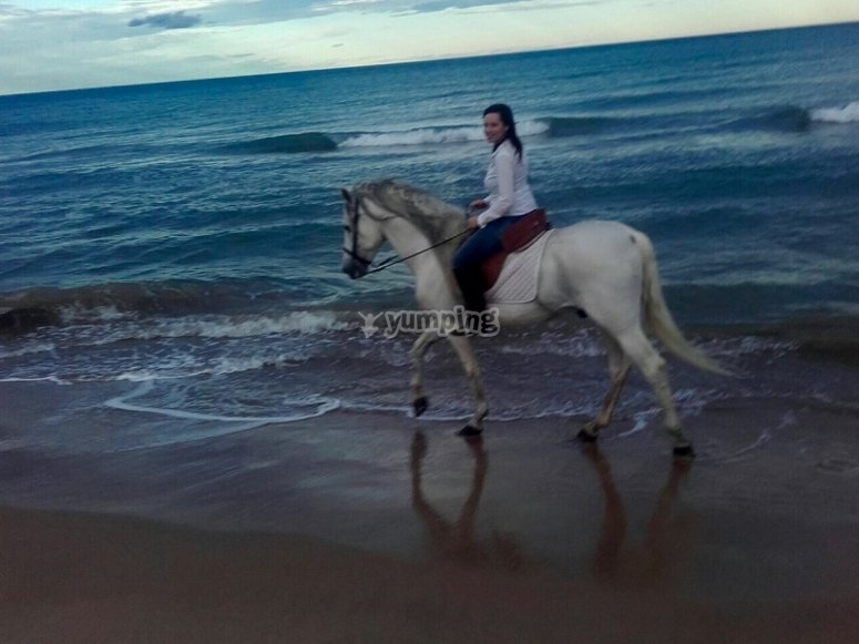 Journey by a horse in the beach of Gandia