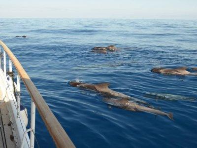 Las Románticas Luxury Yacht Avistamiento de Cetáceos