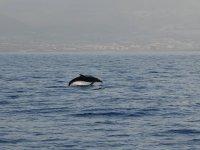 海豚的跳跃