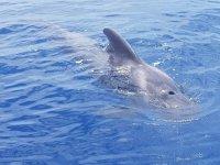 海豚非常靠近船