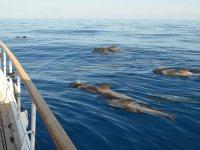 海豚群在船旁游泳