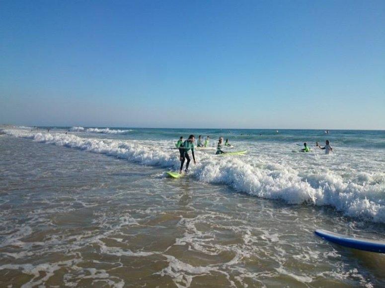 每日冲浪课程