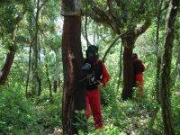 Partida en el bosque