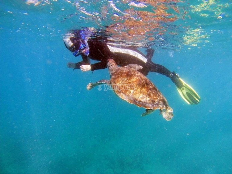 Swimming next to a turtle
