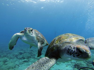 Diving experience with turtles Tenerife 40min