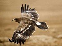 Senderismo y avistamiento de aves Navas del Rey 3h