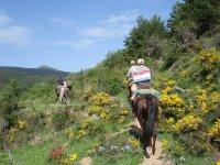 Ruta a caballo por la sierra de Soria