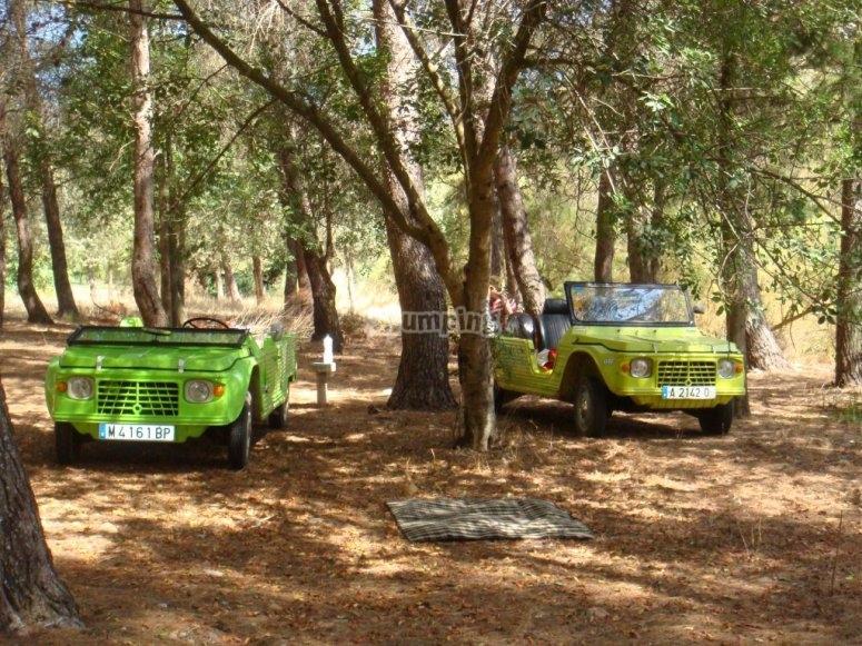 Nuestros vehiculos