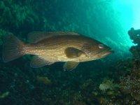 冥想甲板共享鱼潜水员岛