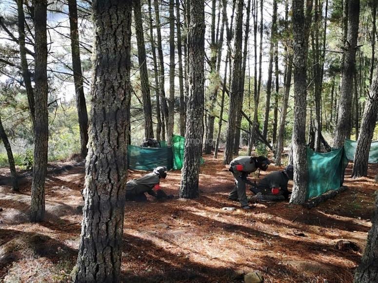 Paintball en bosque de pinos