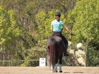 Ensenando ordenes al caballo