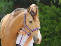 Sujetando al caballo por las riendas