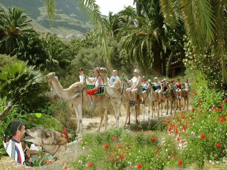 骆驼游乐设施