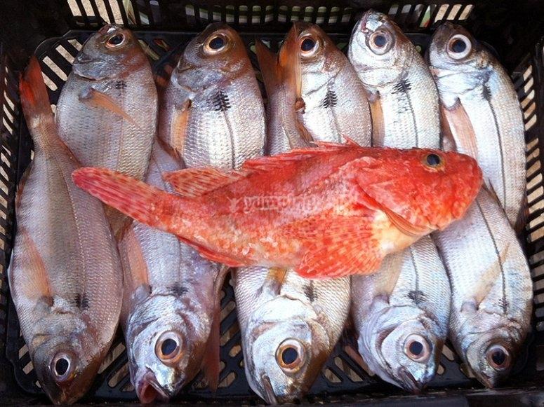 Diversos pescados