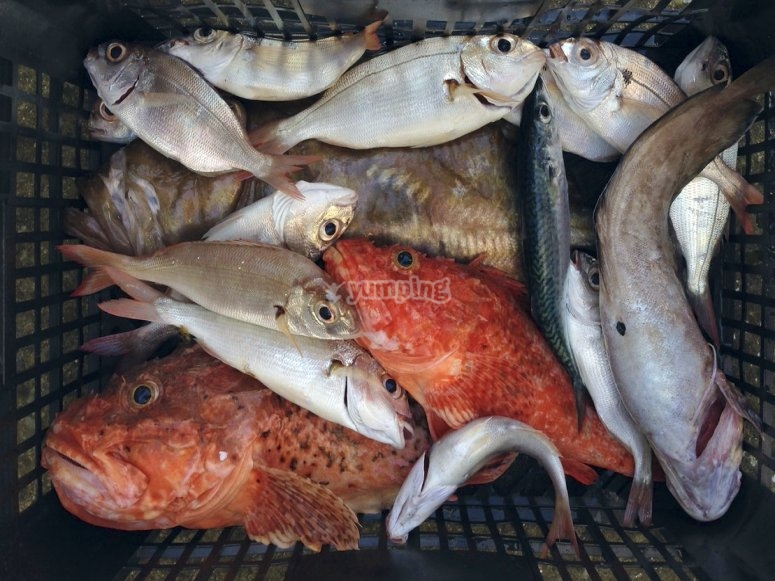 Diversos peces