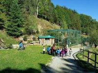 大胆Tirolina园参观和动物园