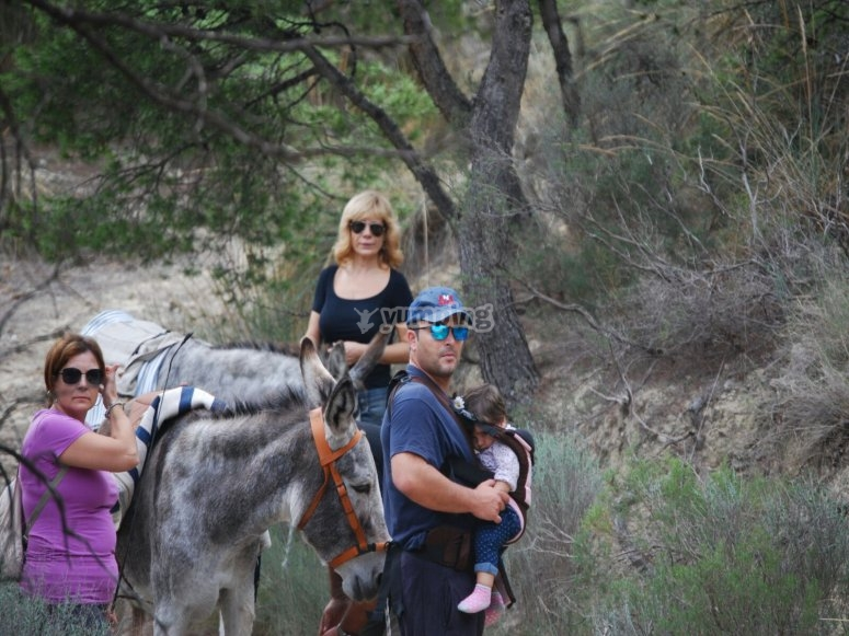 Donkey stroll for kids