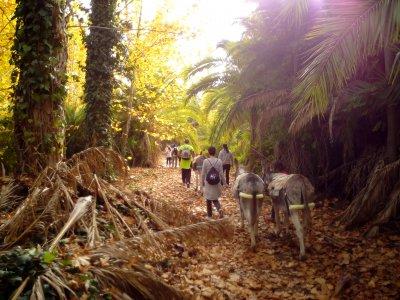 与驴Abarán同伴的摩天轮的路线