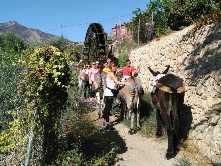 Paseando con los burros