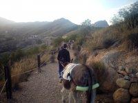 Senderismo con burros
