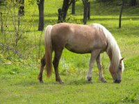 Nature and horse