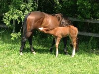 马和小马驹