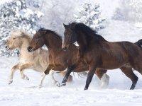 Paseo a caballo en Riaza durante una hora