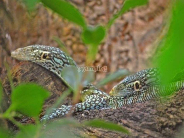 Due serpenti colorati