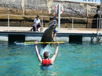 Sea lion jumping