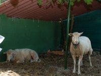visitas a la granja