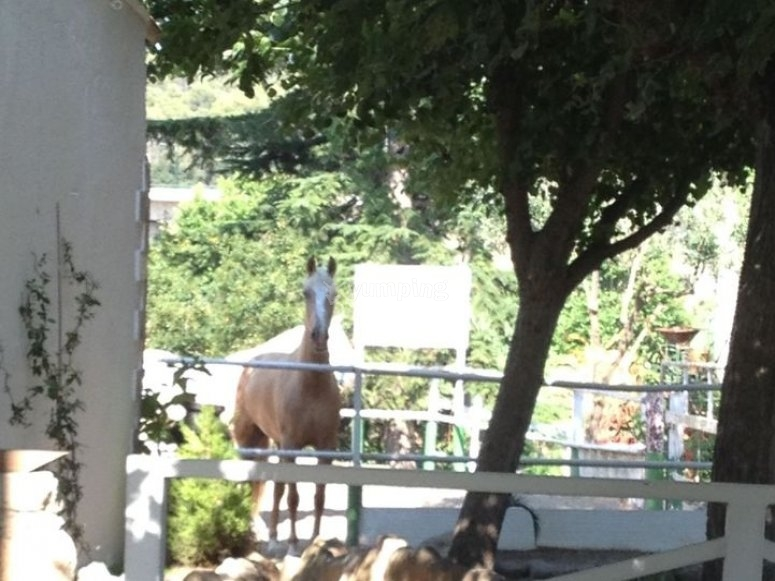 Horse in an enclosure