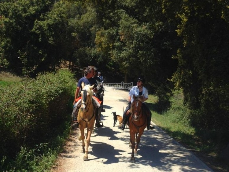 Riding the horse over a path