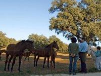 地中海牧场公牛和马的导游