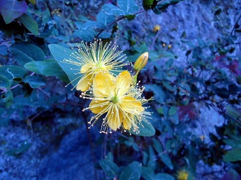 Maravillosa flora