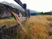 Varias flechas apoyadas