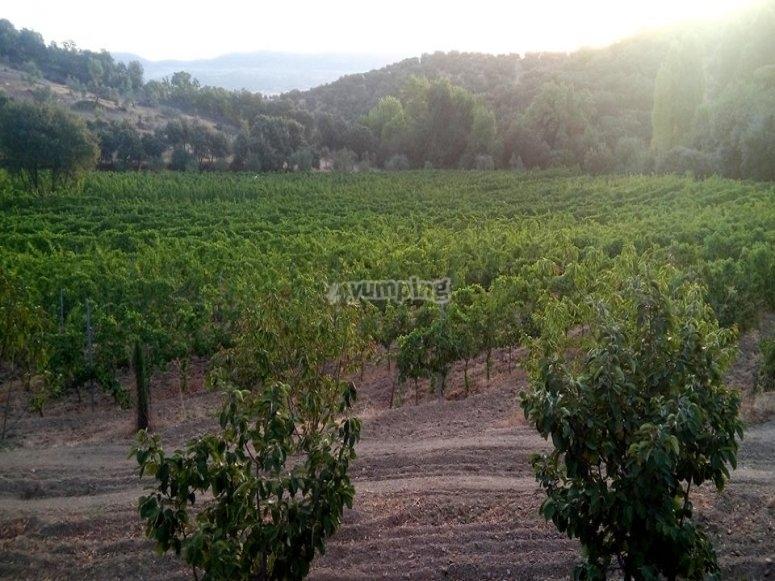 我们的葡萄酒的起源